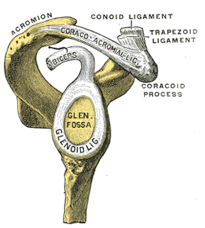Nonoperative Treatment of Superior Labrum Anterior Posterior Tears